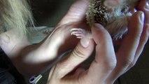 Un et un à un un à soins Coupe exploit hérisson hérissons Comment méthode ongles à Il Smoosh ||