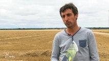 Marais poitevin : Des enclos pour protéger le Busard cendré