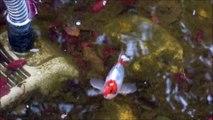 Bassin à poissons Jardin du Bonheur