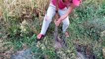 Wow! Amazing Catch A Lot Of Crabs in the Hole by Digging - How to Catch Crab by Dig Hole