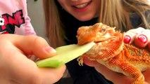 Bonbons aliments gommeux réal contre nourriture ordinaire par rapport à maman Défi marmelade pleurer Challe
