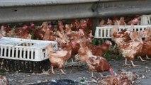 """Autostrada """"pushtohet"""" nga pulat - Top Channel Albania - News - Lajme"""