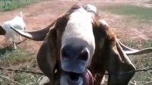 Çok komik hayvanlar -gülme garantili