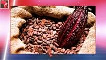Le beurre de cacao peut-il être un remède naturel et efficace contre l'infertilité ?