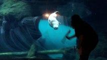 Cette loutre suit la laveuse de vitres de son Aquarium au ZOO !