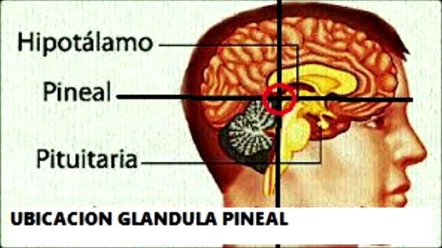 Cómo Activar la Glándula Pineal 1 de 3 - (Audio Libro)