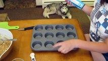 Bricolage chien chiens fait à la maison neige le le le le la friandises avec |