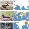 Une sixième extinction massive d'animaux est en cours