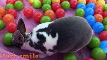 Funny bunnies compilation | Best funny bunny videos by Just smile