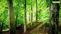 L'Avenir - La forêt de Soignes classée patrimoine de l'Unesco