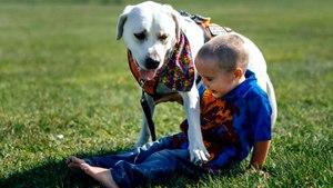 Dog Helps Boy With Autism Stop Having Nightmares