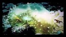 Monstruos Marinos Reales (Documental)