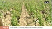 Viticulture : Les Crus du Beaujolais frappés par la grêle