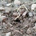 Çalişkan Karıncalar
