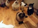Les meilleures cataire chats drôle dur haute rire faire faire sur afin qui vous vous vous