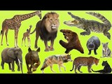 Kids at the Zoo | Animals at the Zoo | Learn Safari Wild ZOO Animals Names | Fun Toddler
