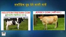 Les meilleures des vaches laitier Agriculture pour dans inde lancement commercial de ces ferme laitière de vaches et de devenir