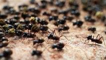 Many ants together...@Rototom Sunsplash 2017