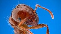 Non, toutes les fourmis ne travaillent pas (et ont le revenu universel)