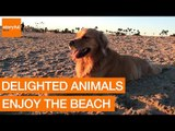 Animals and Beaches: the Perfect Combination?