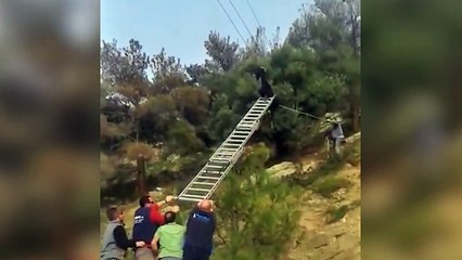 A goat stuck on an electric wire.... WTF??
