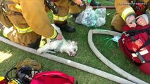 Watch Firefighters Use Oxygen Mask to Revive Dog Pulled from House Fire