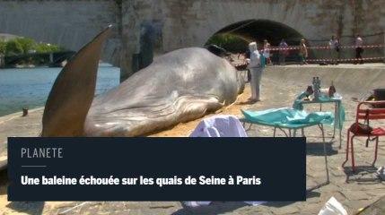Un baleine à Paris pour sensibilier à l'environnement