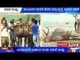 Uttara Karnataka Wildlife: Stag Found Dead On The Shores Of Karwar