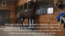 Sur comportement domaine cheval hongre dans sens étalon le le le le la contre
