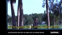 Ils abattent un arbre alors qu'un homme est perché dedans ! (Vidéo)