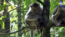 Motorcycle Killed Baby Monkey | Lovely Baby Monkey Was Killed By Motorcycle(Angkor Thom)