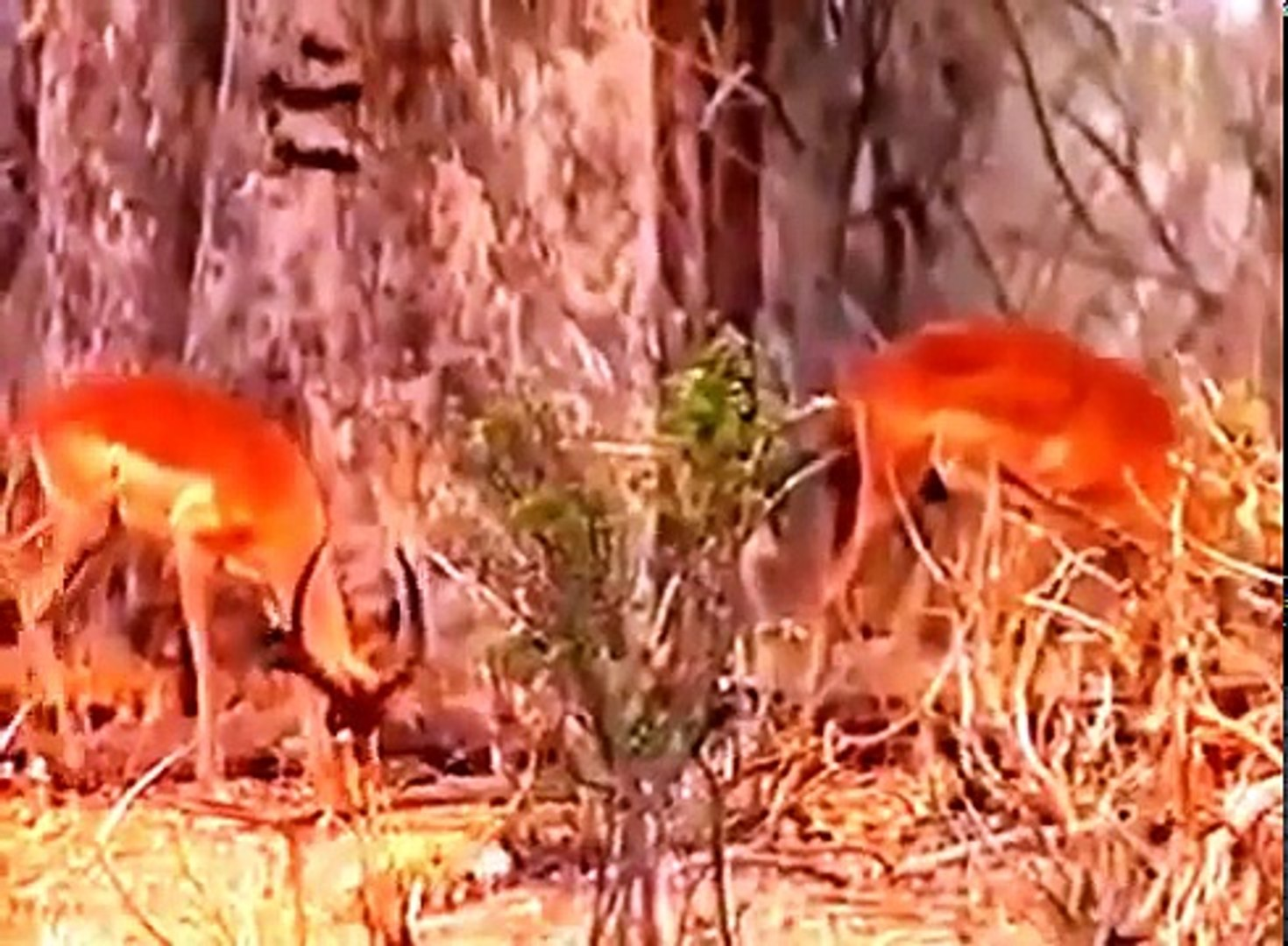 The Fight For Survival Africa Wildlife Documentary , Cinema Movies Tv FullHd Action Comedy Hot 2017