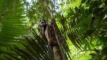 ✅ Sobrevivendo na Tribo ☆ 1ª Temp.- Epis.1 ☆ Floresta Tropical.