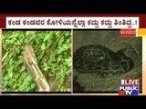 Karwar: Wicked Cobra Caught Red Handed Eating Eggs From Farmer's House