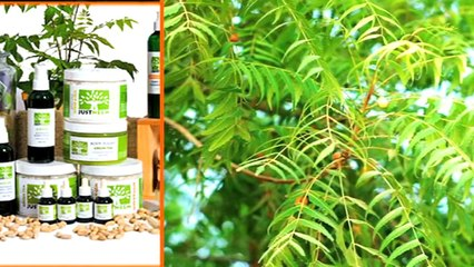 Amazing Benefits of Neem Seeds