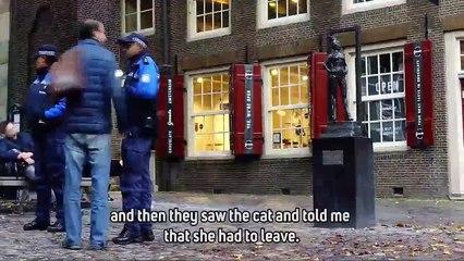 Cat fight anyone The Law vs. pub cats