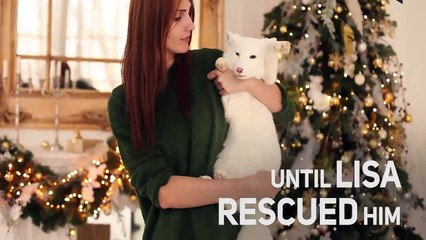 From fur farm to a1 bed apartment - Baby Arctic Fox