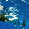 Nager avec des dauphins au large des côtes azuréennes