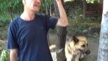 Kahramanmaraş Köpekten Korkup Çıktıkları Ağaçta Mahsur Kalan Yavru Kediler Kurtarıldı