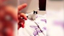 Ce chat a de vrais talents d'acteur !