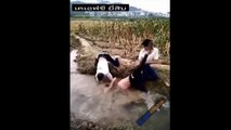 funny china 2017 best fun k compalition