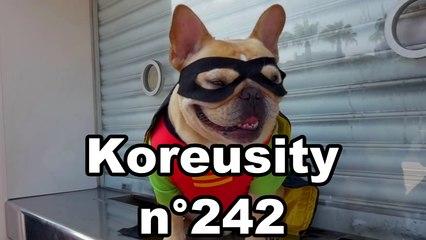 Koreusity n°242