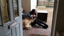Cette chienne ne parvient pas à retenir son enthousiasme lorsqu'elle la découvre sa surprise.