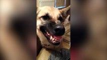 Ce chien fait vraiment des bruits bizarres !
