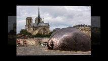 """Beached """"whale"""" found in central Paris"""