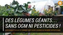 Des légumes géants… sans OGM ni pesticides !