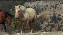 WILD HORSES IN THE ARROWHEAD MOUNTAINS - Animals Wildlife Nature Documentaries (full documentary)