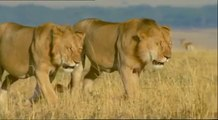 SCAVENGERS OF THE SAVANNAH - Discovery Animals Nature Documentaries (full documentary)