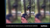 Russie : Un ours affamé vole la nourriture de campeurs, les images insolites (Vidéo)