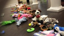 Le Entrainer animaux chanson chanson pour enfants et enfants enfants la télé